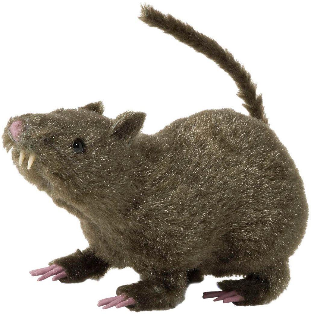 Harige rat