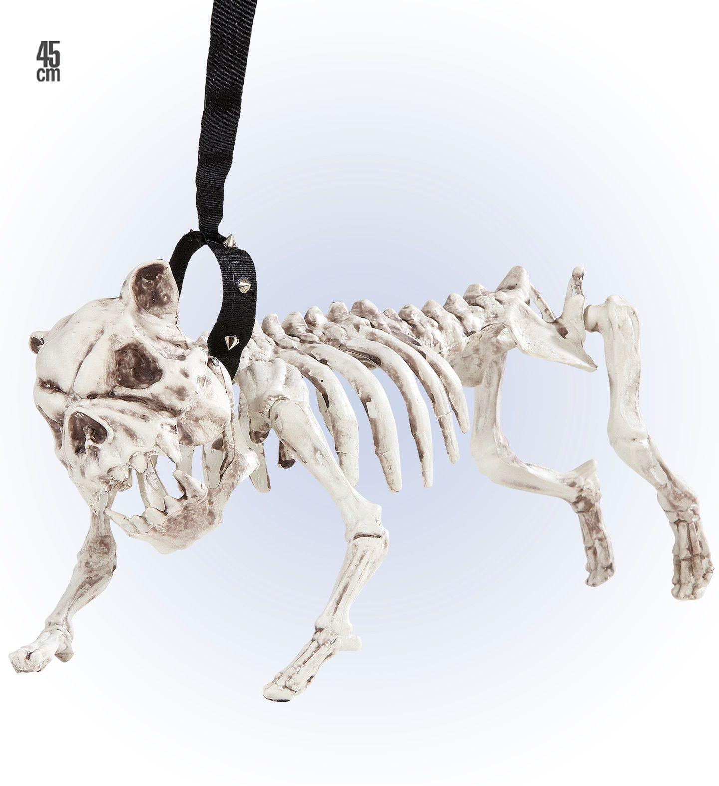 Hondenskelet