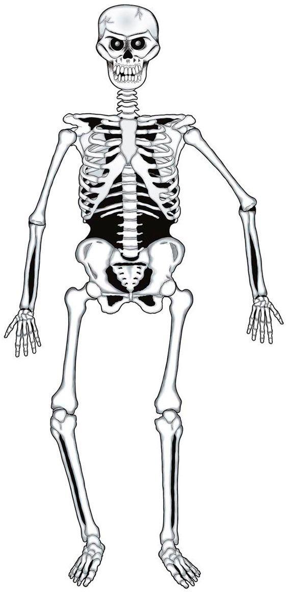 Papieren skelet decoratie