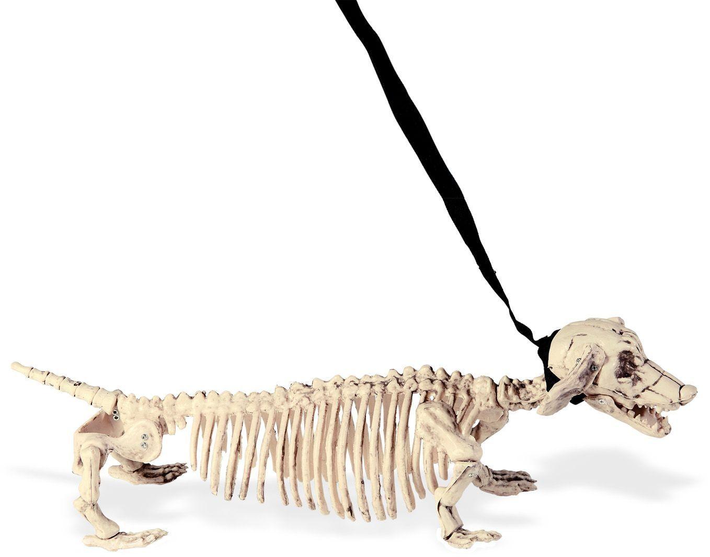 Skeletten hond met riem