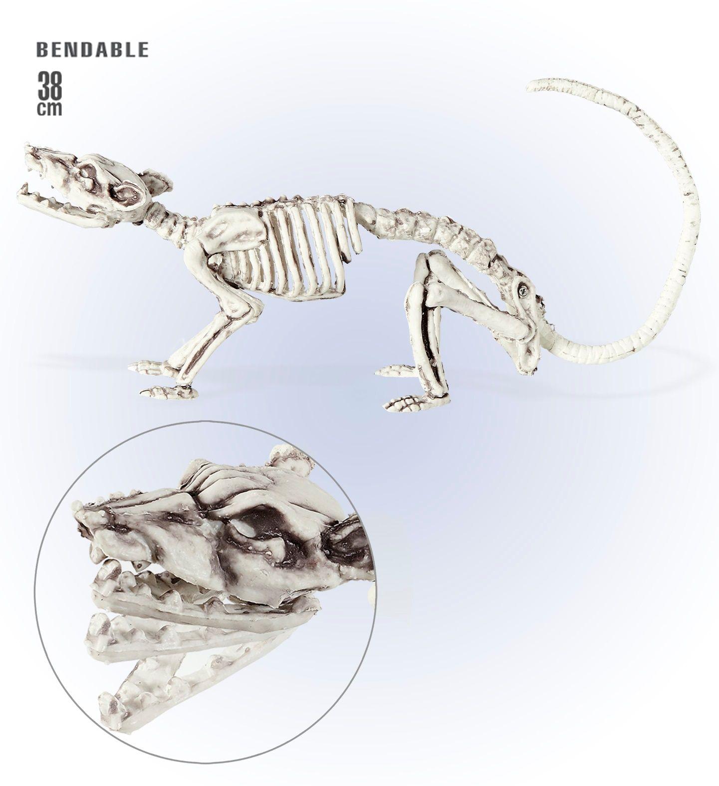 Skeletten rat