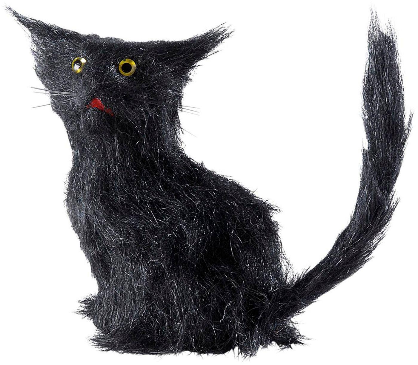 Zwarte harige kat